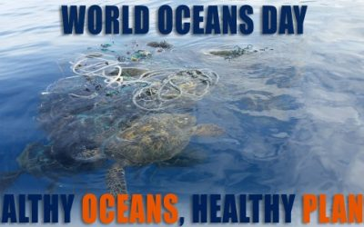 "An image of some turtles in the ocean, with the words ""healthy oceans, healthy planet"""